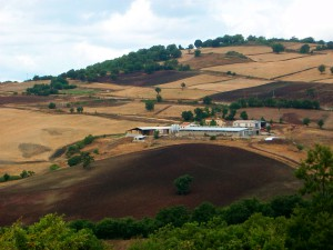 Azienda Agricola Giura Francesco
